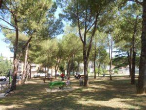 Parco Pineta 003 ridotta roberto