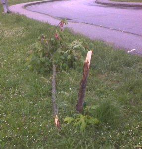 parco ponte san giovanni ancora un albero abbattuto