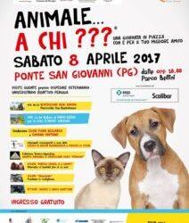 """""""Animale a chi ?"""" evento per cani e padroni"""